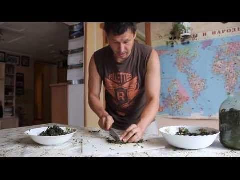 Заготовка Иван-чая. Ферментация и подготовка к сушке. Часть 3 - YouTube