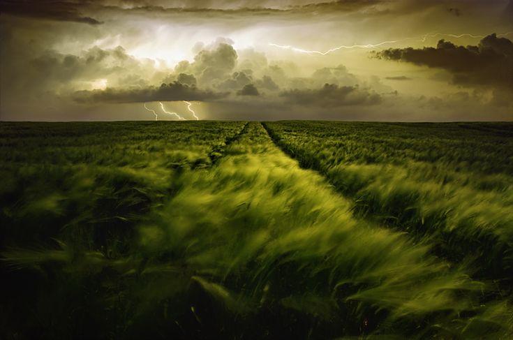 Cestou do búrky divokej
