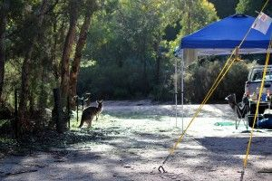 The best places to go camping with kids if you live in Brisbane.