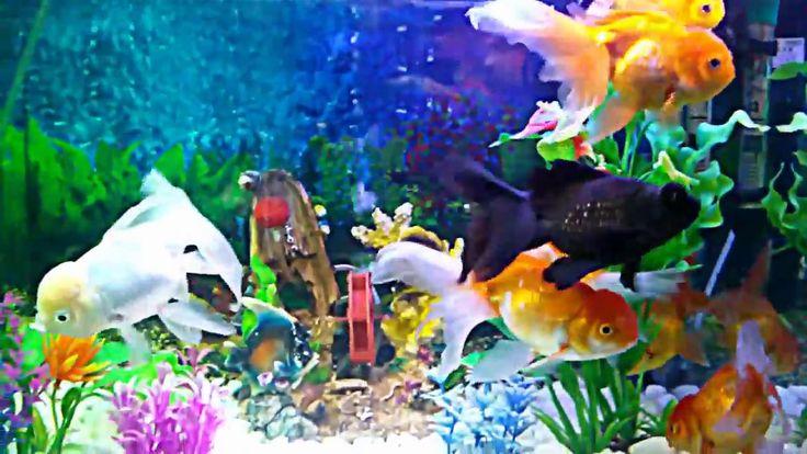 BEAUTIFUL    FISH    SHOW    2
