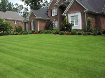 Zenith Zoysia sod....might put this one in the back yard