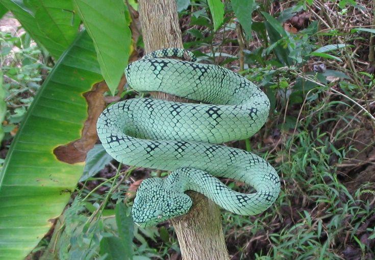 Hadí mast vyhladí vrásky a zbaví vás bolestí kloubů