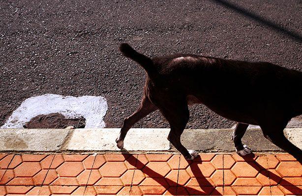 stray dog.