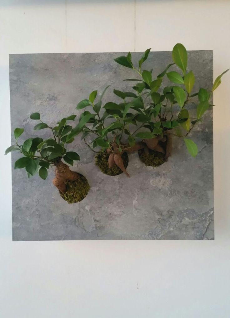 Quadro pietra e ficus bonsai di Verdecontemporaneo00 su Etsy
