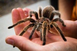Pet Tarantula Care 101