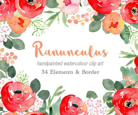 Watercolour Handpainted Clip Art Ranunculus Elements Flower