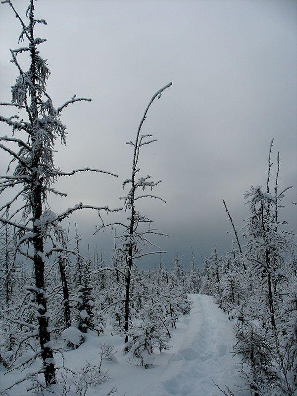 Muskeg in winter, Waskesiu, Saskatchewan, Canada