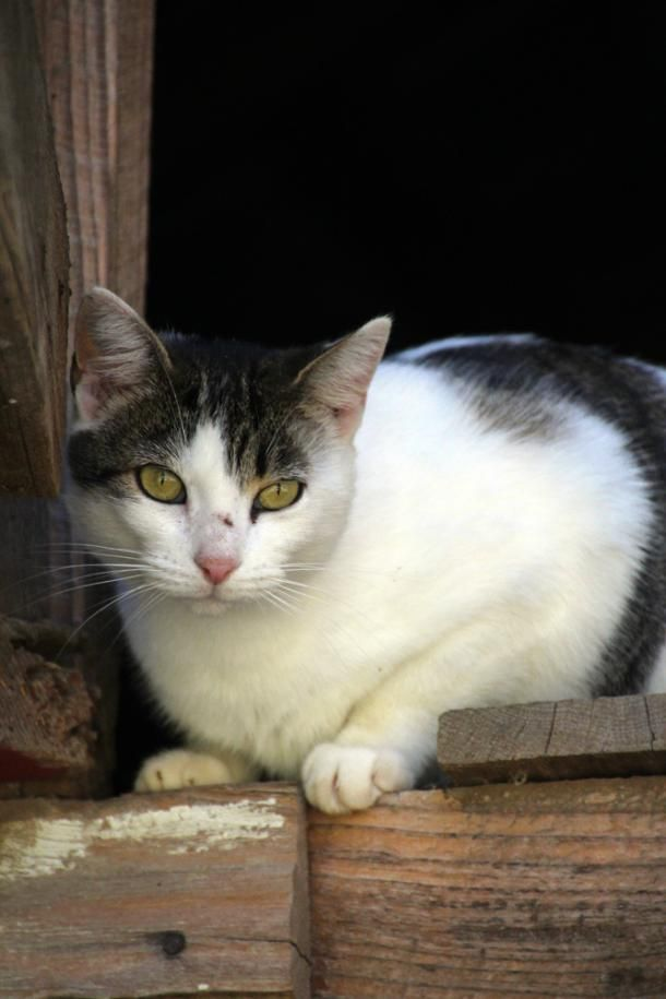 Uncle Lee Roy's Cat | Living the Country Life