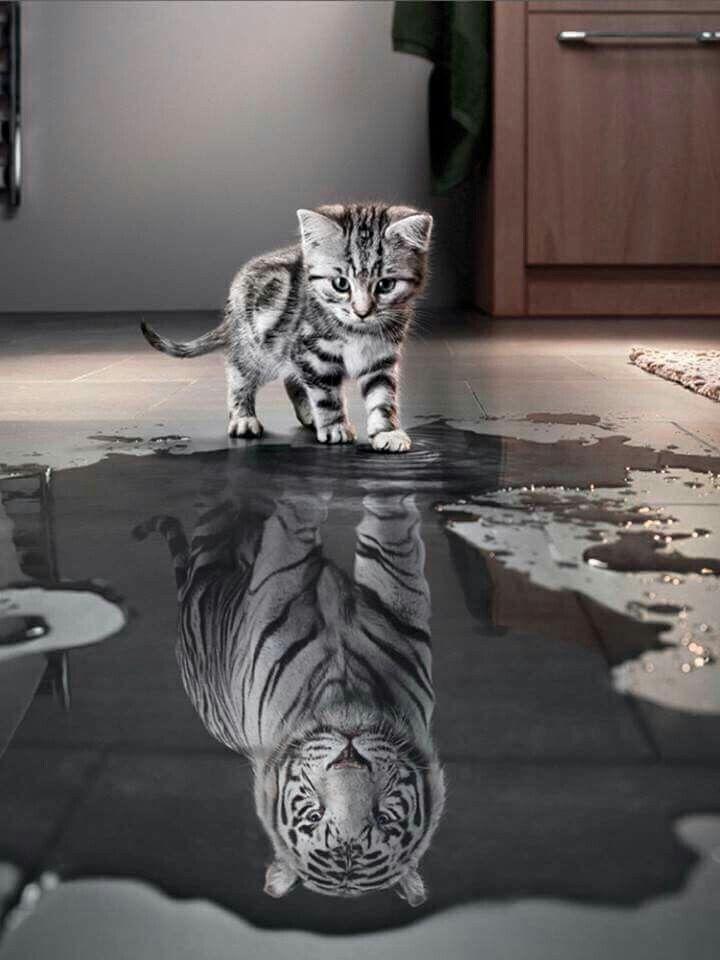 Du kannst alles sein, wenn dein Wille stark genug ist!