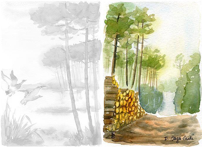Aquarelles Les Landes Artiste Peintre Francette Berger Cardi