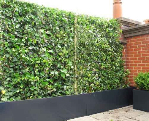 Garden Planters - Very Large Wooden Trough Planters 1.8m long. Alternative to fencing
