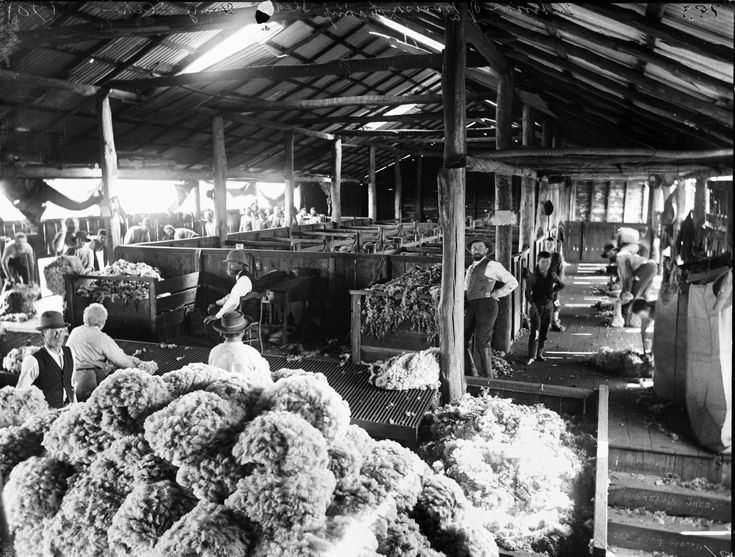 Shearing shed from the Powerhouse Museum Collection