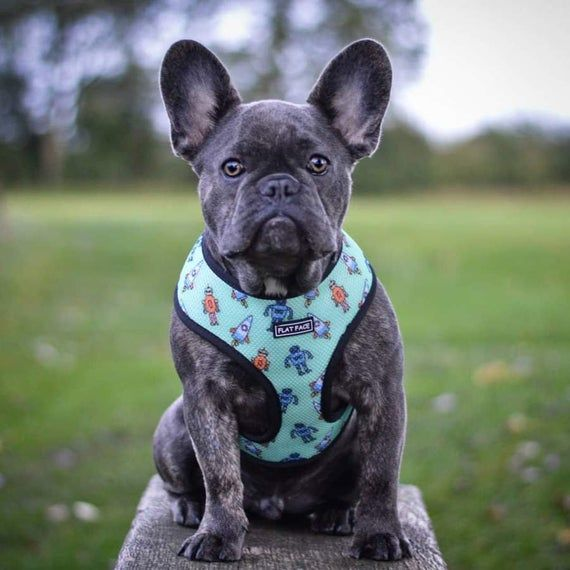 Flat Face Reversible Dog Harness Comfort Chest Harness Blue