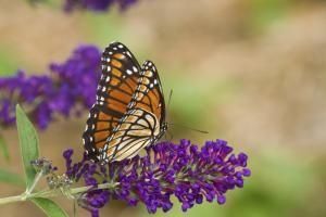 10 ideas para los jardines en primavera: Planta arbustos para mariposas