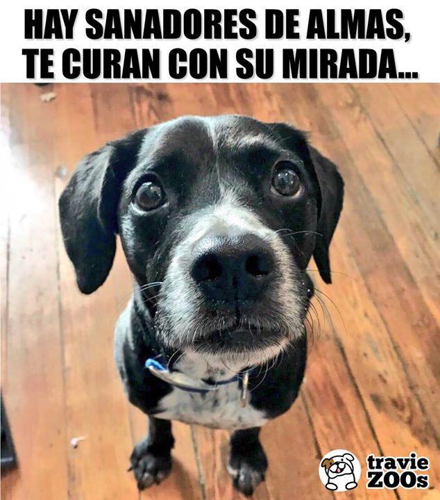 Curados Al Instante De Cualquier Mal Citas De Animales Perros Frases Perros Tristes