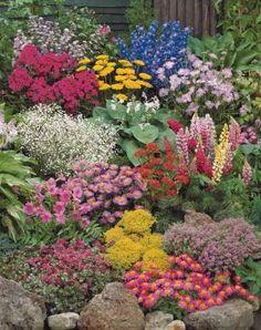 La collection de 12 plantes vivaces. Superbe collection composée de plantes vivaces très florifères et faciles à cultiver. De quoi fleurir un massif ensoleillé et composer de superbes bouquets durant tout l'été. Comprend 1 de chacune des variétés suivantes : Aster rose, Pied d'alouette bleu (godet), Phlox à panicules rouges, Achillée jaune, Gypsophile blanc, Hosta, Lupin, Incarvillée rose, Erigeron rose (godet), Sédum rouge (godet), Sédum jaune (godet), Thym serpollet (godet).
