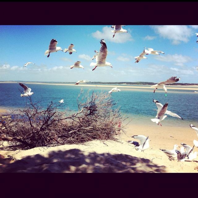 Feeding seagulls at inverloch inlet