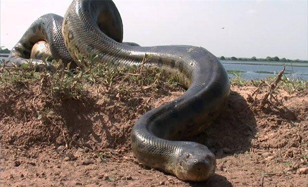 I 10 animali più spaventosi che vivono in Amazzonia
