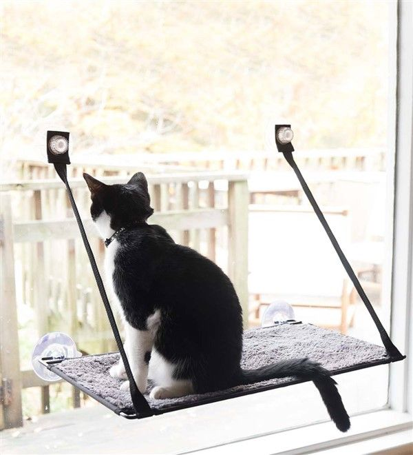 3 Safe Window Ideas For Cats Window Box Cat Solarium Window Sill Perch Unique Balcony Garden Decoration And Easy Diy Ideas Small Cat Cats Cat Window