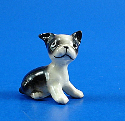 miniature boston terrier best 25 miniature boston terrier ideas on pinterest 7435