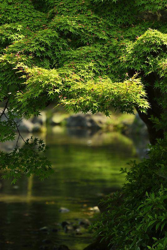 ritsurin-koen garden, takamatsu, japan #trees #nature #photography