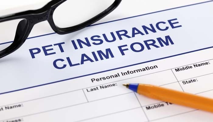 Pet Insurance Comparison: What is the Best Pet Insurance for Dogs?   Top Dog Tips