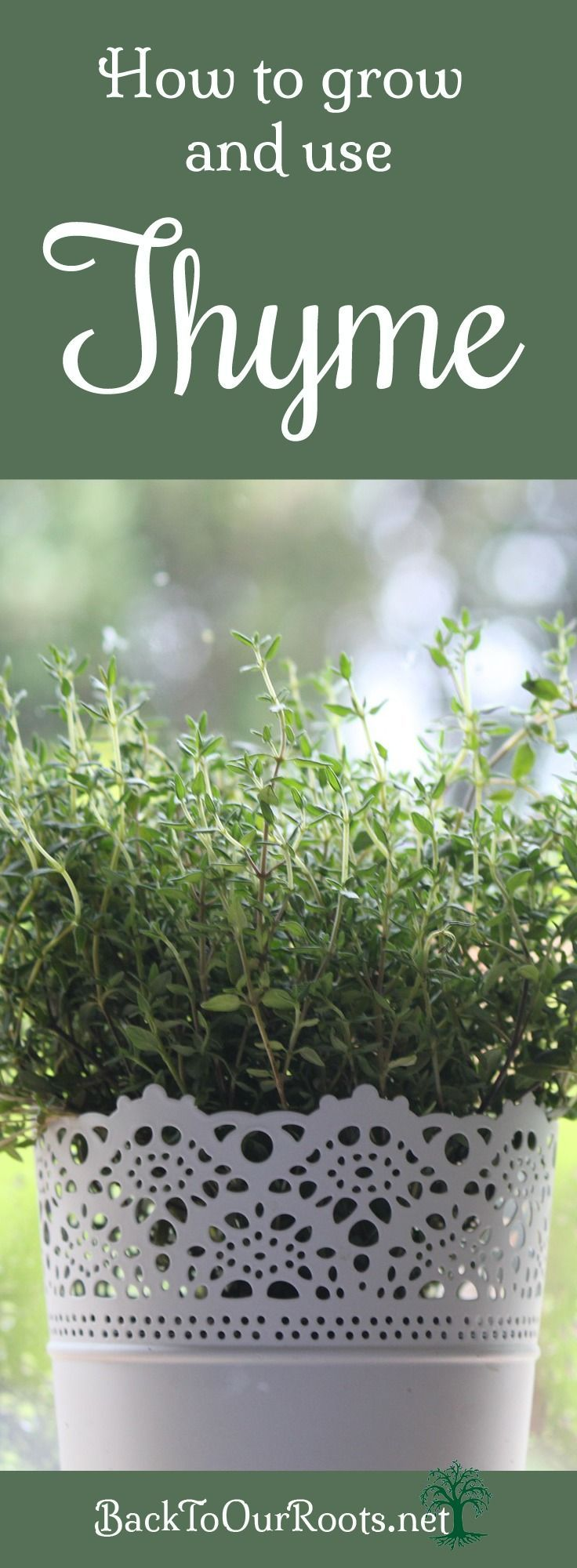 It's About Thyme ~ A Versatile and Easy to Grow Herb