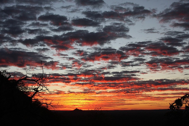 My favorite place on the planet. Sunrise over the great African plains in Botswana.