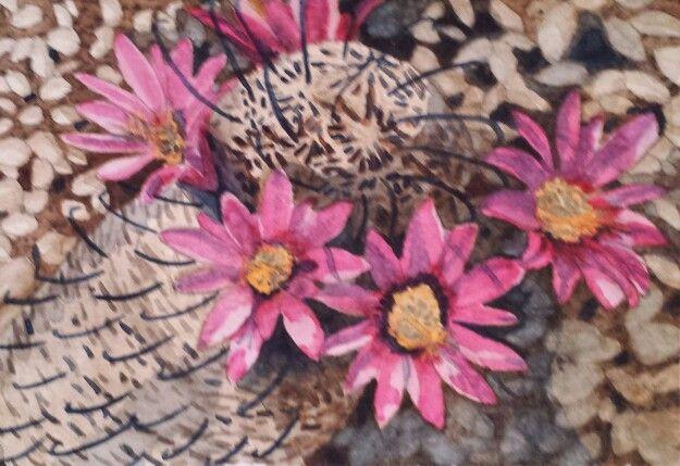 Cactus flowers, Saguaro National Monument, Tucson, AZ. Watercolor painting by Donna Whitsitt