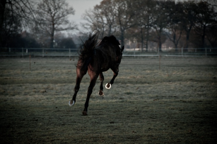horse is jumping #animals #wild #photographyExcept