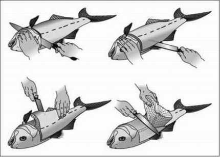 step-by-step 'fishy filleting for dummies'... because guys love to watch a chic fillet their catch.  true story!