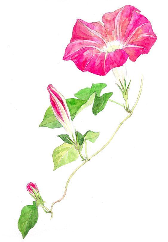 2015.4.21 tue.窓辺の朝顔、枯れたと思っていたツルから一斉に芽が吹き出した。いっぱい咲いて欲しい。冬中放置していたベランダのプランターは、今や雑草が生い茂ってる。都会では雑草を見る機会も少ないし、刈り取るのも惜しくて眺めてる。植物って逞しい。春って素晴しい。《朝顔》