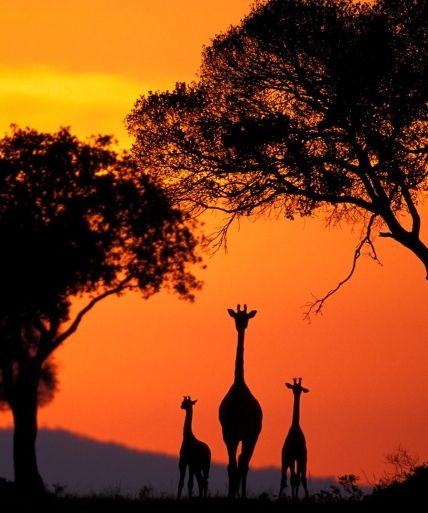"""Looking to explore dramatic silhouettes in your photos? """"The 10 to 20 minutes after sunset can produce a fantastic colored sky. If you use a digital SLR-camera: Select your exposure reading based off the brightest part of the picture. Focus on the animal and take the picture."""""""