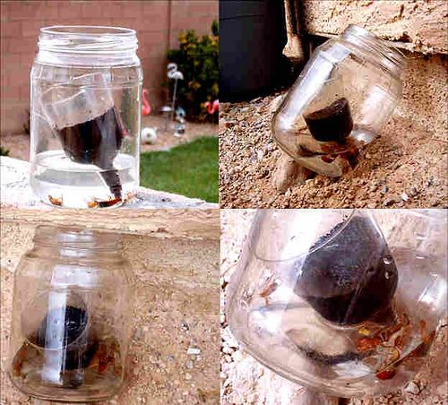 87 best images about Pest control on Pinterest | Roaches, Ants and ...