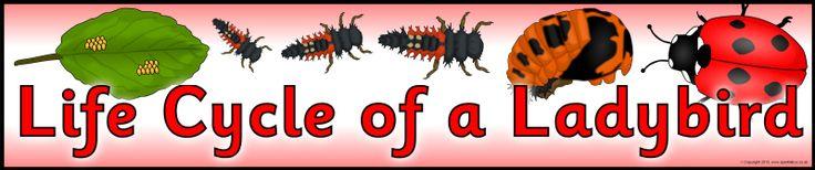 Life Cycle of a Ladybird display banner (SB9616) - SparkleBox