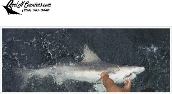 21 best deep sea fishing pensacola images on pinterest for Pensacola deep sea fishing