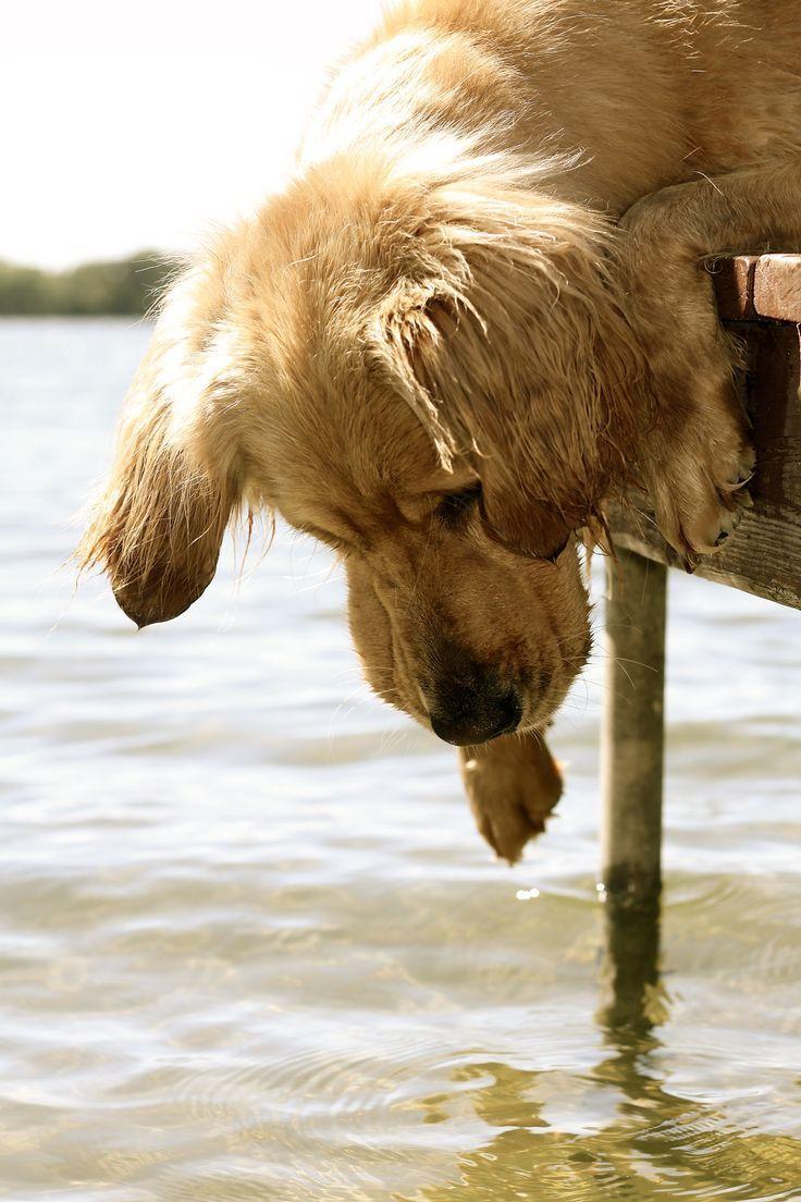 Hey hey ...., wer ist denn da im Wasser?