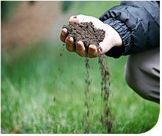 Why Should You Choose Nutri-Lawn?
