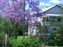 Anywhere in Australia with a Jacaranda Tree
