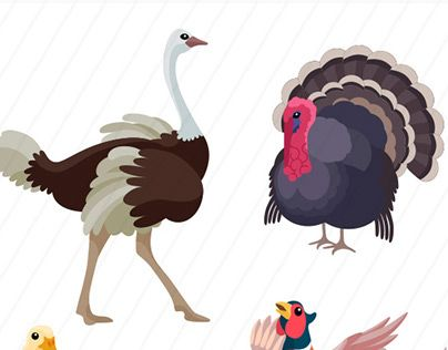 """Check out new work on my @Behance portfolio: """"Farm birds from all over the world"""" http://be.net/gallery/35005639/Farm-birds-from-all-over-the-world"""