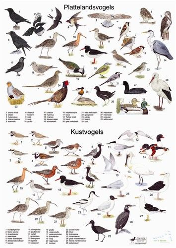 Zoekkaart Plattelandvogels en Kustvogels