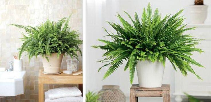 Aunque seas un desastre con las plantas, estas cinco van a estar estupendas en tu casa.