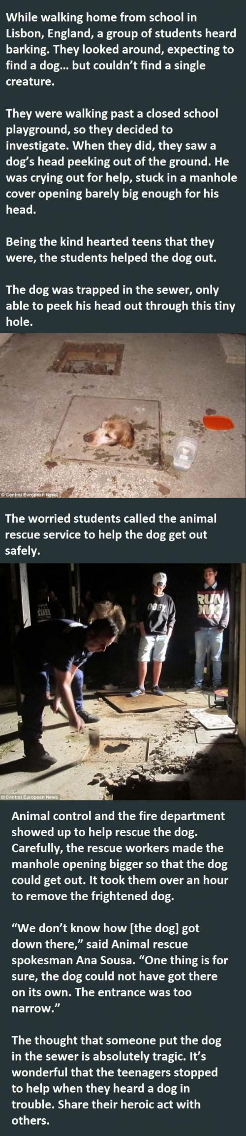 This dog got saved by a group of students.