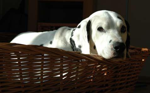 Hunde müssen sich auch zurück ziehen können. Ein fester Platz, an dem die Tiere Ruhe haben, hilft dabei enorm. Mehr dazu lesen Sie in diesem Tipp