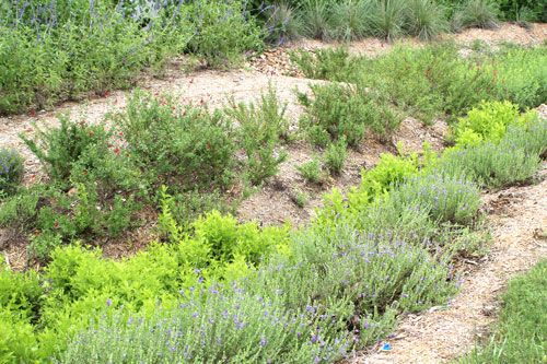 Plants, how to for building a rain garden in South Texas.