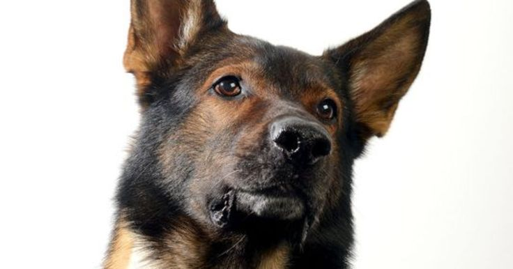Jeff  Perryman credits veterinarians at Michigan State University for saving the 7-year-old dog's life in late January.