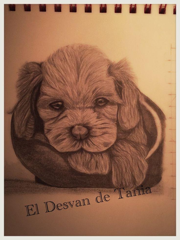 Retrato a lápiz perrito. @eldesvandetania