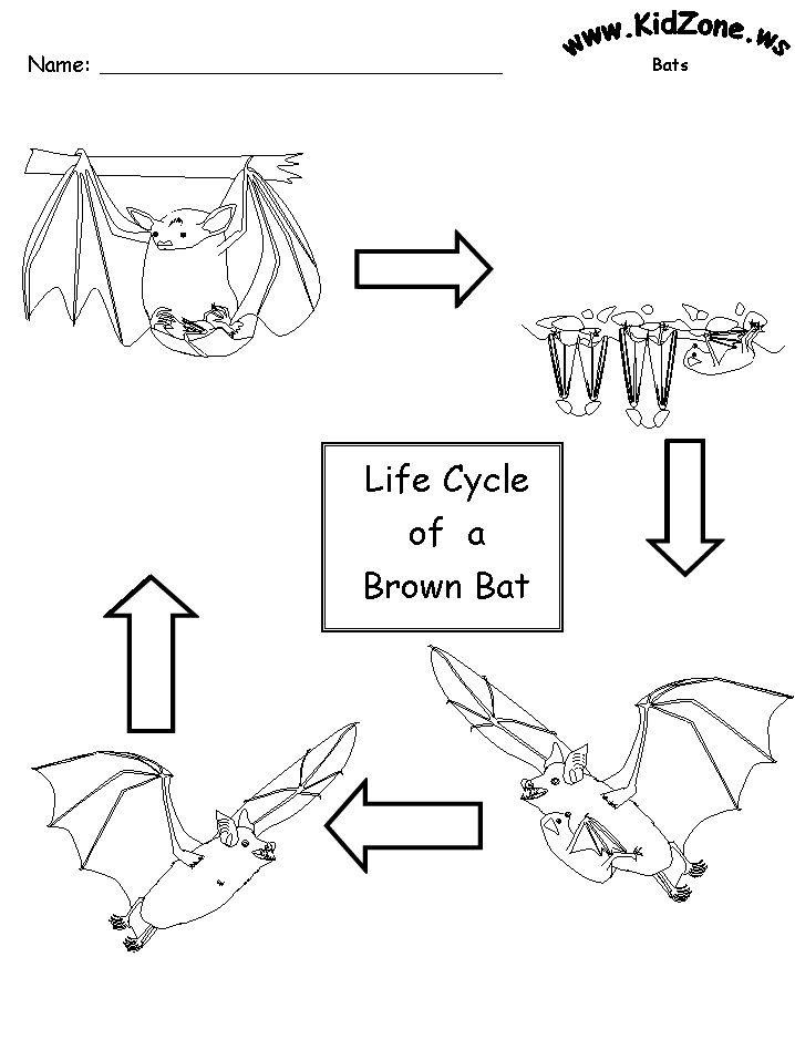 Life Cycle W O Words Unit Bats Pinterest Bats
