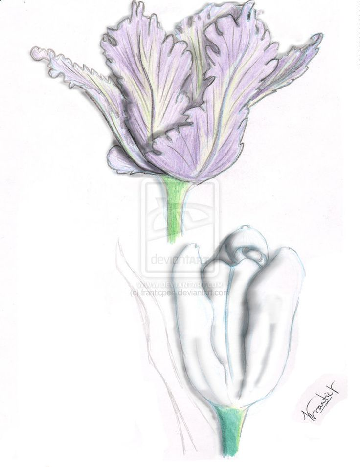 tulip flower tattoo designs   Creative Commons Attribution-Noncommercial-No Derivative Works 3.0 ...