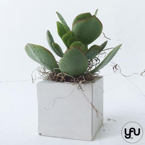 Marturii plante suculente in suport turnat GEOMETRIC- M34 - https://www.yau.ro/collections/marturii-nunta-si-botez?page=1 - yauconcept - elenatoader